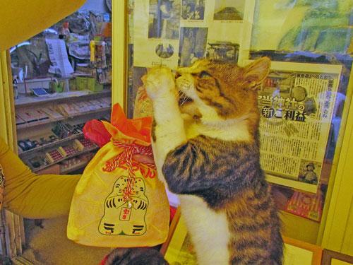 お願いポーズをする猫ちゃんと宝当巾着
