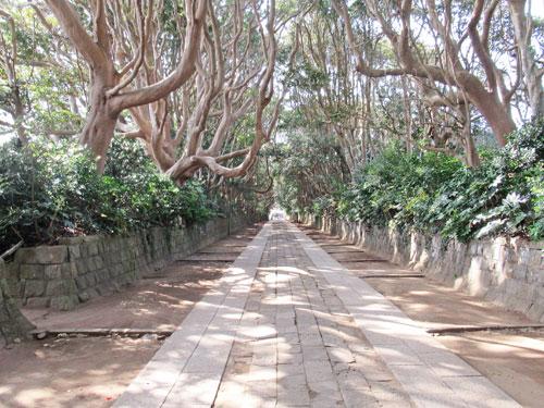 樹齢300年以上の常緑広葉樹や椿が生育している深い緑のトンネル
