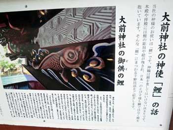 大前神社の神使鯉の話