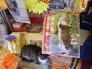 週刊誌に掲載された猫のお願いポーズ