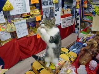 猫の福ちゃんがお願いポーズ