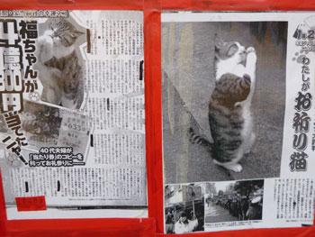 雑誌の記事に掲載された猫のお願いポーズ