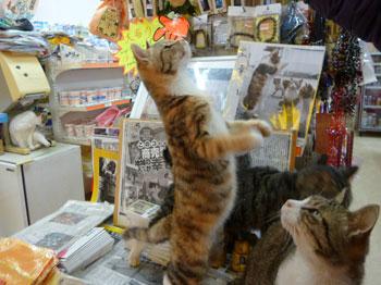 店内で猫のお願いポーズ