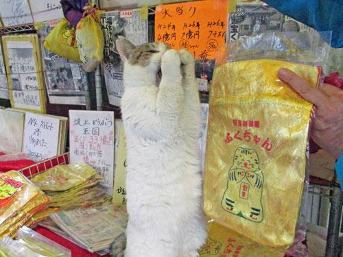 猫のさっちゃんがお願いポーズをしています
