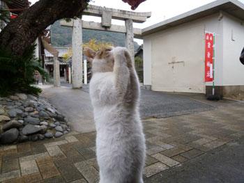 神社の前で猫のお願いポーズ