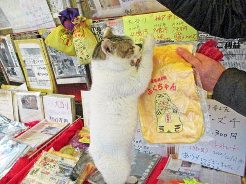 猫のお願いポーズ