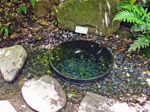 こんこんと水が湧き出ている井戸