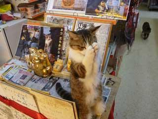 超有名な猫の福ちゃんがお願いポーズをしています