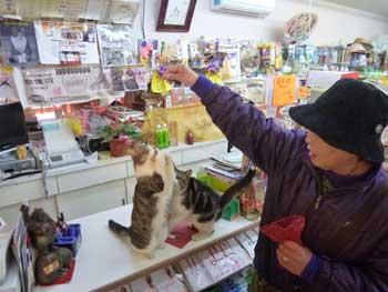 超有名猫の福ちゃんのお願いポーズ