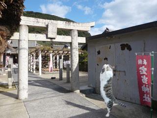 宝当神社の鳥居とお願い猫