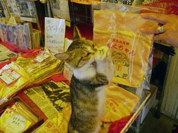 猫のふくちゃんのお願いポーズ